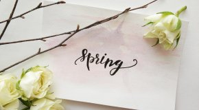 spring graphic with flower